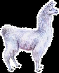 White Llama Or Alpaca Hand-drawn Watercolor Sticker