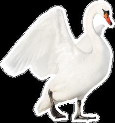 White Swan Isolated On White Sticker