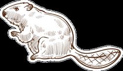 Wild Beaver Forest Animal Sketch Sticker