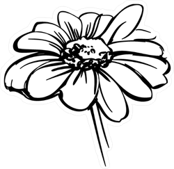 Wild Daisy Flower Sketch Sticker