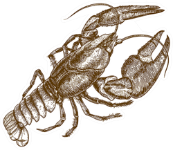 Woodcut Illustration Of One Lobster Sticker