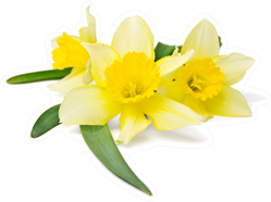 Yellow Daffodils and Leaves Sticker