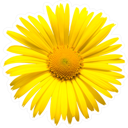 Yellow Daisy Top View Sticker