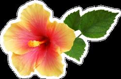 Yellow-Pink Hibiscus Sticker