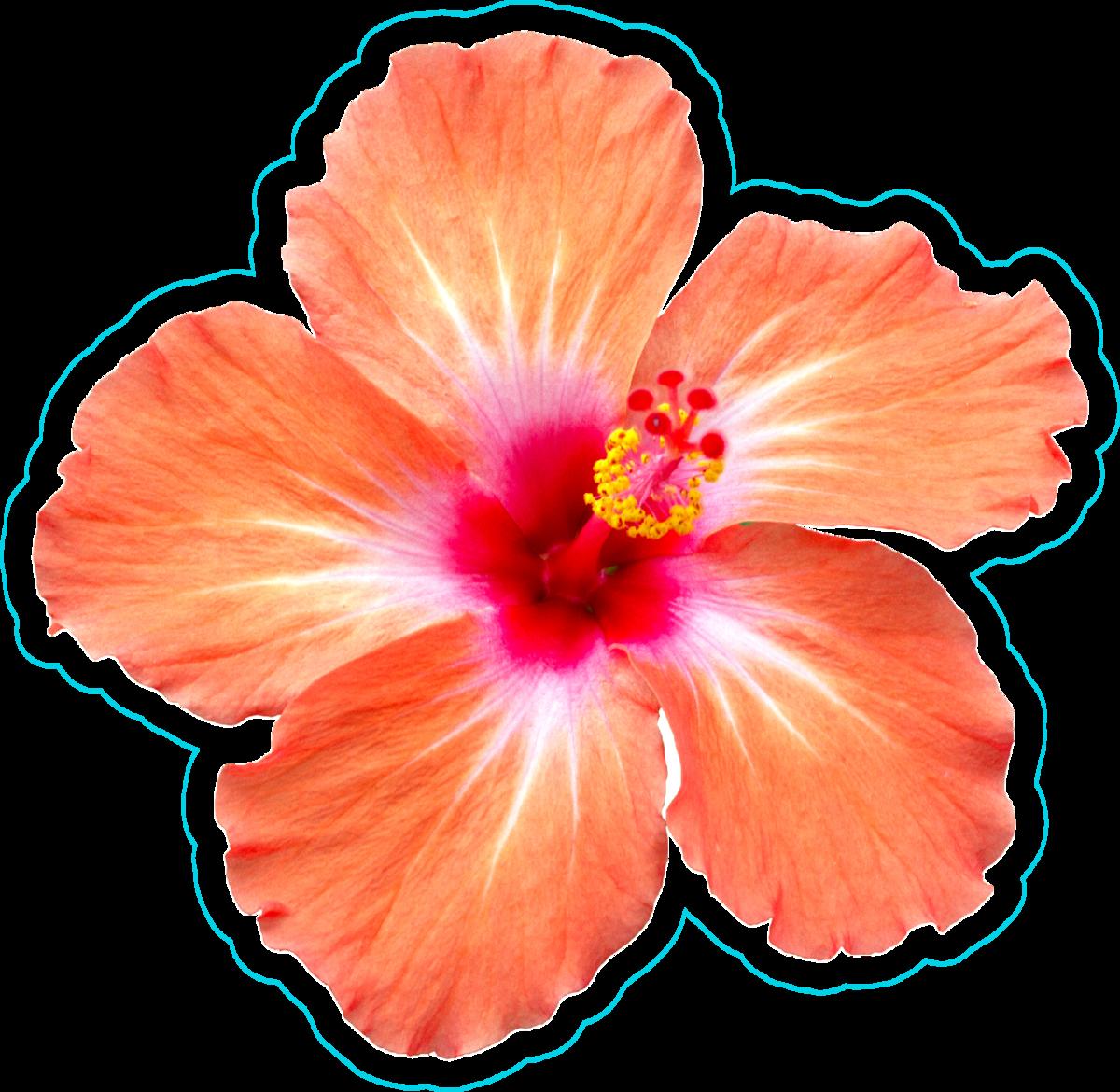 Orange Hibiscus Sticker