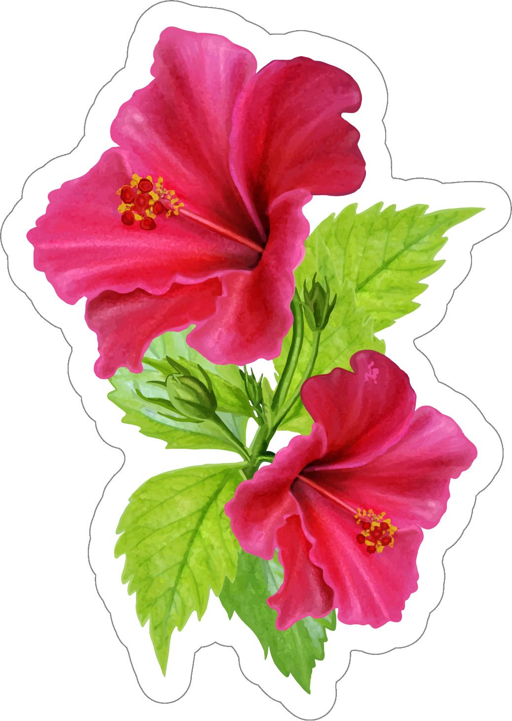 Hibiscus flower sticker beautiful pink hibiscus flower sticker izmirmasajfo