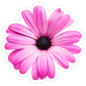 Purple Daisy Flower Sticker