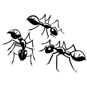 Three Detailed Ants Sticker