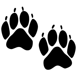 Bear Tracks Sticker