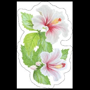 Beautiful Hibiscus Flower Sticker