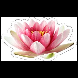 Beautiful Pink Lotus Flower Sticker