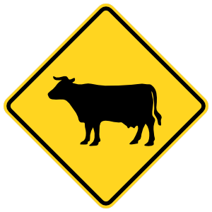 Warning Cows Sticker