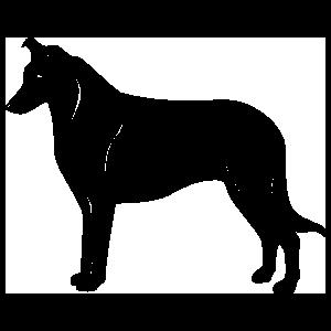 Collie Dog Sticker