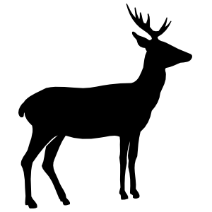 Young Deer Sticker