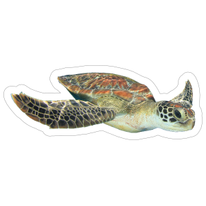 Diving Turtle Sticker