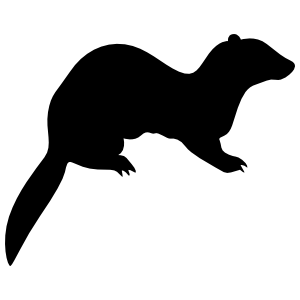 Ferret On Four Feet Sticker