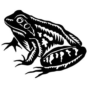 Cool Detailed Frog Toad Sticker