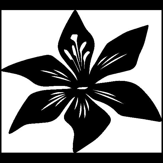 Phragmipedium QF Halia QF Kamakakilo Tyler x kovachii in spike