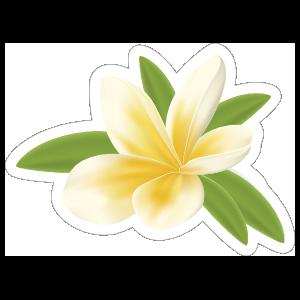 Pretty Plumeria Flower Sticker