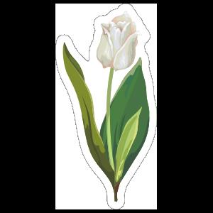 Short White Tulip Flower Sticker