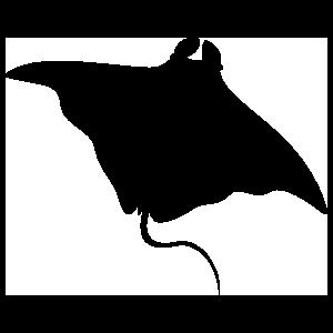 Stingray Manta Ray Swimming Sticker