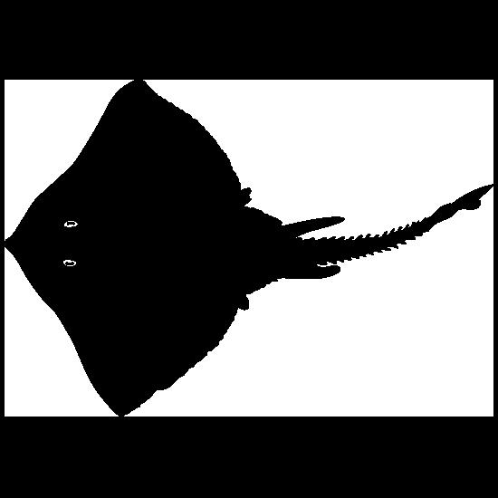 Detailed Stingray Manta Ray Sticker